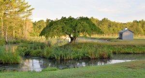 Plympton, MA Tree